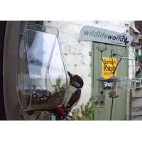 DEWDROP WINDOW BIRD FEEDER