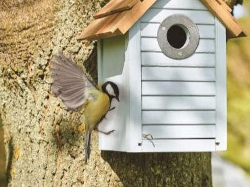 Choose the right Bird Box for your garden.