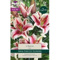 LILY BULBS (Pre-packed) 5 to choose.