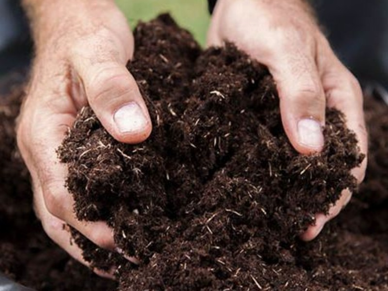 What is compost? A brief guide to the black stuff.