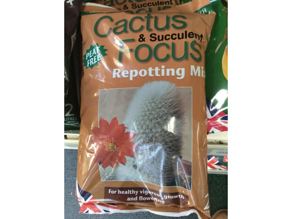 CACTUS FOCUS COMPOST 2ltr
