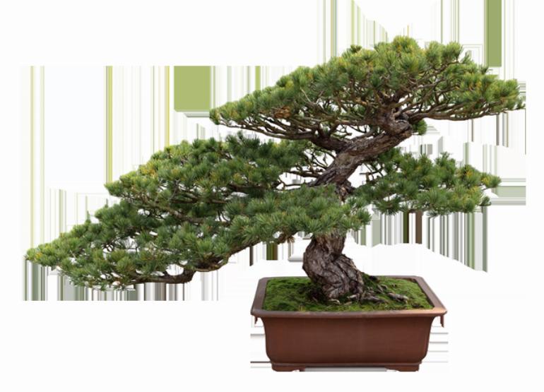 Bonsai Products