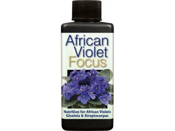 African Violet Focus