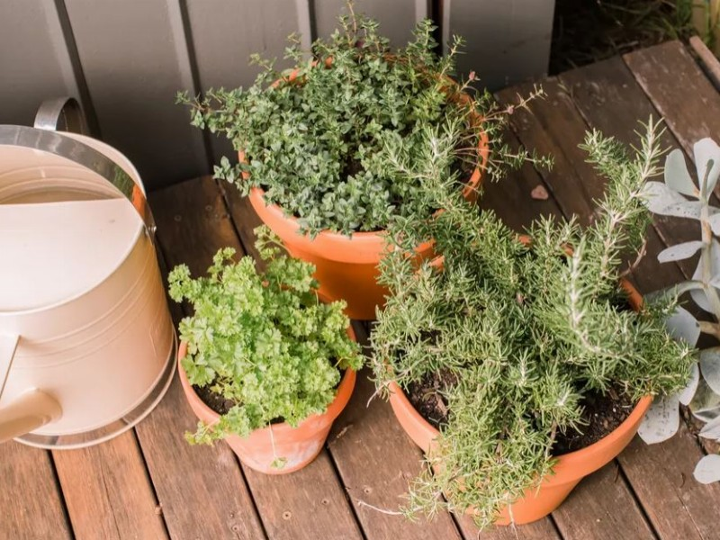 5 Great Herbs to Grow in Pots and Easy Tips for Growing Herbs in Containers