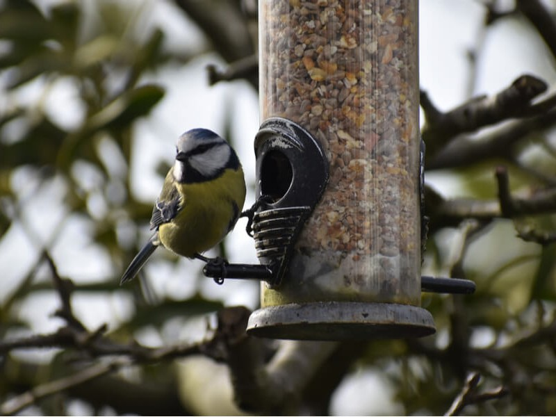 What Should You Be Feeding Britain's Wild Birds?