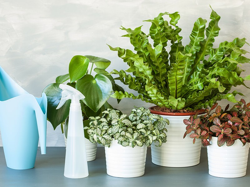How to keep your indoor plants flourishing all year round
